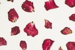Droge de pers nam bloem met bloemblaadjes, op Witboek, uitstekende toon toe Royalty-vrije Stock Foto's