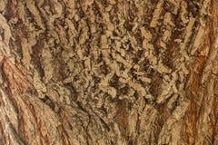 Droge de textuurachtergrond van de boomschors Stock Foto's