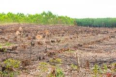 Droge die de Boomstompen van de rij oude besnoeiing door ontbossing, milieuproblemen worden veroorzaakt stock afbeelding