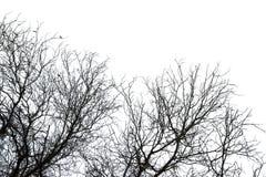 Droge die doodsboom op wit wordt geïsoleerd Stock Fotografie