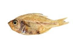 Droge die vissen op witte achtergrond worden geïsoleerd stock foto's