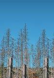 Droge dode bomen Stock Foto's
