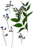 Droge dringende bladeren van schatten Stock Fotografie