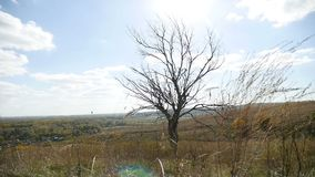 Droge eenzaam op het gebied op boom een achtergrond van de blauwe aard van de hemelherfst stock videobeelden