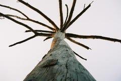 Droge eenzame boom Royalty-vrije Stock Fotografie