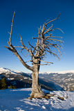 Droge eenzame boom royalty-vrije stock foto