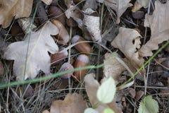 Droge eiken bladeren ter plaatse voor achtergrond stock foto's