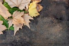 Droge en groene bladeren bovenop een lijst stock foto's
