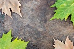 Droge en groene bladeren op de rand van een raad stock foto