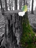 Droge en groene stomp Stock Afbeelding