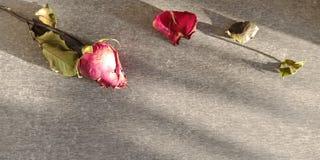 Droge en vernietigde rozen op donkere achtergrond stock fotografie