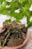 Droge en verse citroenbalsem met lepel op witte houten lijst, herbalism royalty-vrije stock foto