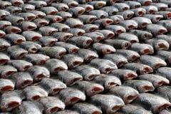 Droge fish stock foto