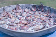 Droge fishs Stock Foto
