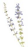 Droge flora royalty-vrije stock afbeeldingen