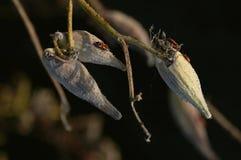 Droge fruit en insecten Royalty-vrije Stock Foto's