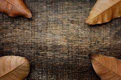 Droge gebarsten blad oude houten Stock Fotografie
