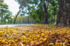Droge gele bladeren op de bestrating Royalty-vrije Stock Foto