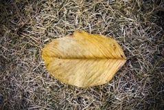 Droge gele bladeren op het droge gras royalty-vrije stock afbeelding
