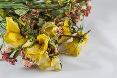 Droge gele rozen Stock Afbeelding