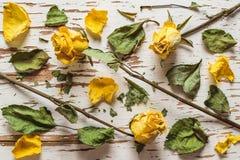 Droge gele rozen met verspreide bloemblaadjes en bladeren De mening vanaf de bovenkant Royalty-vrije Stock Afbeeldingen