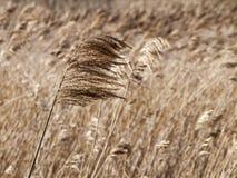 droge gras en wind stock foto's