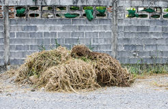 Droge grasstapels op klein rotsgrond en grunge cementblok wa Royalty-vrije Stock Afbeeldingen