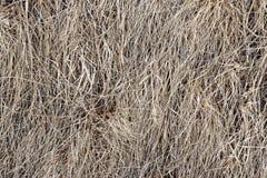 Droge grastextuur als achtergrond, oud hooi, vorig jaar, hooien royalty-vrije stock afbeelding
