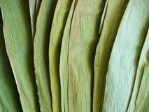 Droge groene bamboebladeren in licht en schaduw Stock Afbeelding