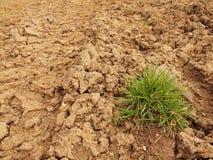 Droge grond van gebarsten klei met bosje van gras. Royalty-vrije Stock Afbeeldingen