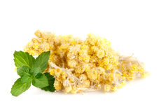 Droge Helichrysum of immortelle bloemen op witte achtergrond Stock Foto's