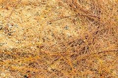 Droge het bladdaling van pijnboomnaalden op zand in het strand royalty-vrije stock afbeeldingen