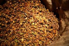 Droge hopbloemen Royalty-vrije Stock Afbeelding