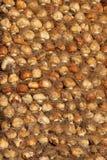 droge hyacintbollen. Royalty-vrije Stock Afbeeldingen