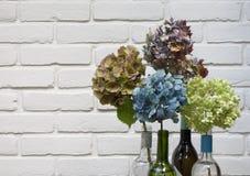 Droge hydrangea hortensia's tegen witte achtergrond royalty-vrije stock afbeelding