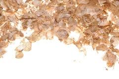 Droge hydrangea hortensiabloemblaadjes Stock Afbeeldingen