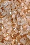 Droge hydrangea hortensiabloemblaadjes Royalty-vrije Stock Foto