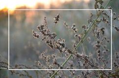 Droge installaties bij zonsondergang, achtergrond voor tekst stock foto