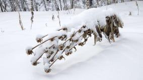 Droge installaties in de sneeuw Stock Foto's