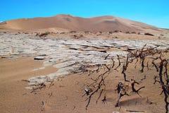 Droge installaties in de woestijn stock afbeelding