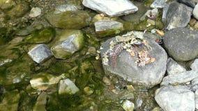 Droge installaties op de rots dichtbij kleine bergkreek stock footage