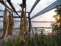 Droge kabeljauw in Noorwegen Stock Fotografie