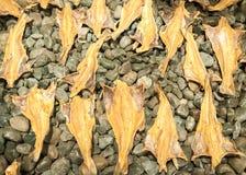 Droge Kabeljauwvissen in IJsland royalty-vrije stock afbeelding