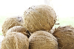 Droge kokosnoot Stock Foto's