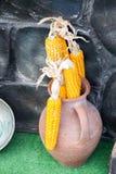 Droge korrels op de gepelde maïskolfpitten stock foto's
