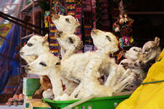 Droge Lama bij Heksenmarkt, Lapaz Bolivië Stock Afbeelding