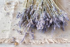 Droge Lavendel Stock Afbeelding