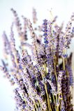 Droge Lavendel Stock Foto's