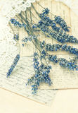 Droge lavendelbloemen, kant en oude liefdebrieven Royalty-vrije Stock Foto's