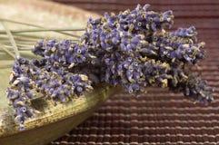 Droge lavendelbos Royalty-vrije Stock Afbeeldingen